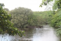 One of the last mangrove forests in Manila Bay.